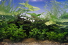 "Plant Reversible Background 12"" High (sold by foot)"